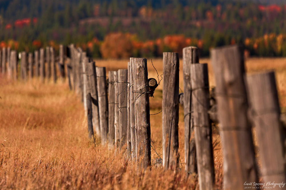 An old fence stretches on across a meadow as far as the eye can see in Grand Teton National Park