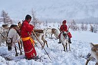 Mongolie, province de Khovsgol, les Tsaatans, éleveurs des rennes, transhumance hivernale, pause de repos // Mongolia, Khovsgol privince, the Tsaatan, reindeer herder, winter migration, the reste pause