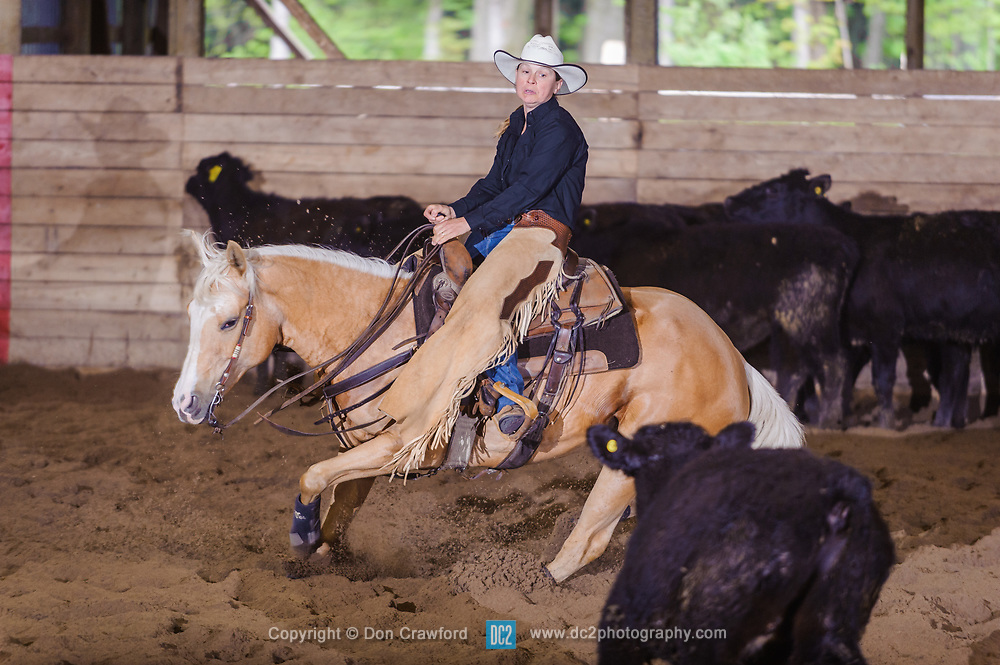 May 21, 2017 - Minshall Farm Cutting 4, held at Minshall Farms, Hillsburgh Ontario. The event was put on by the Ontario Cutting Horse Association. Riding in the 5,000 Novice Horse Class is MIchell Waters on Genuine Whyte Gold owned by Norren Whyte.