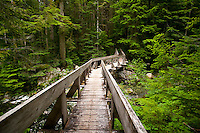 Typical of the West Coast hiking experience is the lush green forest and many bridges built to cross the fast flowing creeks that permeate BC forests.  Landslide Lake, Strathcona Provincial Park, Vancouver Island, British Columbia, Canada.