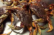 Crabs<br />
