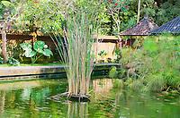 Sacred pool with koi in at Pura Kebo Edan near ubud, bali, indonesia