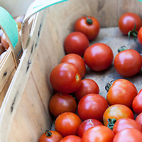 A basket of 'Chadwick's Cherry' heirloom tomatoes