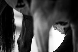 Bandaging<br /> Laiterie de Montaigu Trophy<br /> Longines Masters Paris 2016<br /> © Hippo Foto - Cara Grimshaw
