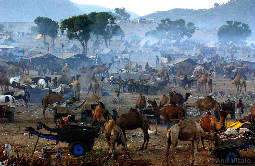 Camel traders from India look at the vast offerings as sun falls at the largest camel fair in the world in Pushkar, India in the state of Rajasthan November 26, 2001. Thousands of camels and traders come to the annual event which some say have been going on for centuries.