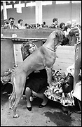 MRS. DAVIES AND BEN, Crufts, Olympia. London. 1987.