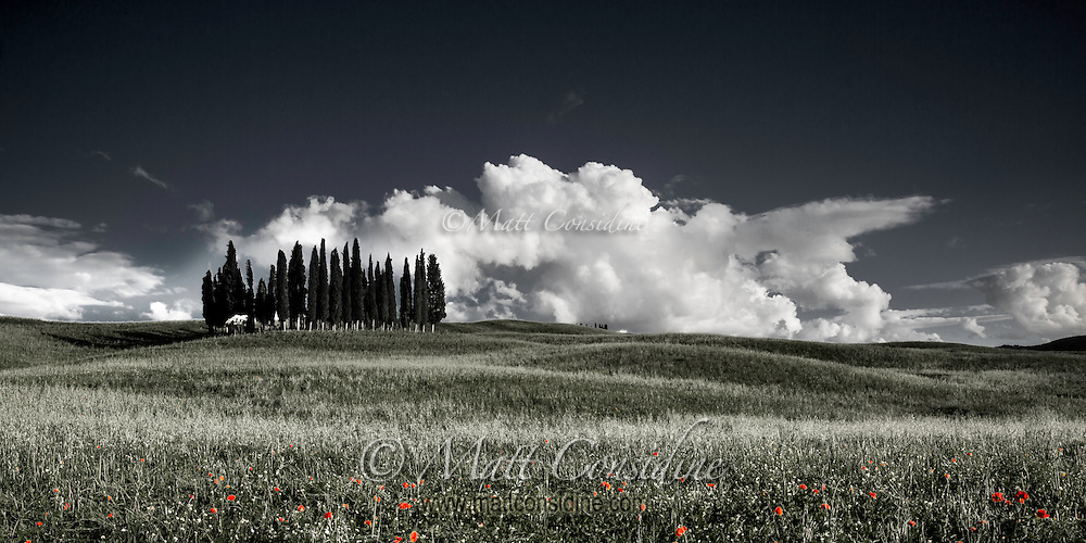 Copse of Cypress pines between rolling hills with wild poppy in the foreground. (Photo by Travel Photographer Matt Considine)