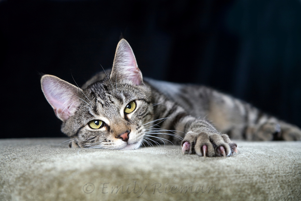 Cat reaching with claws extended