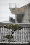japan  garden 2