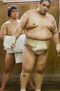 Professional sumo wrestler Takeuchi Masato (ring name Miyabiyama- Graceful Mountain), practicing for a tournament in Nagoya, Japan.  (Takeuchi Masato is featured in the book What I Eat: Around the World in 80 Diets.) MODEL RELEASED.