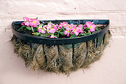 Hanging basket of plants on wall