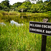 A small lake near the entrance to the Tikal Maya ruins complex has crocodiles. Set deep in the Guatemalan jungle, Tikal has abundant wildlife of jaguars, howler monkeys, spider monkey, coatimundis, toucans, and ocellated turkeys.