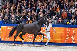 454, Morricone VDT<br /> KWPN hengstenkeuring - 's Hertogenbosch 2020<br /> © Hippo Foto - Dirk Caremans<br /> 01/02/2020