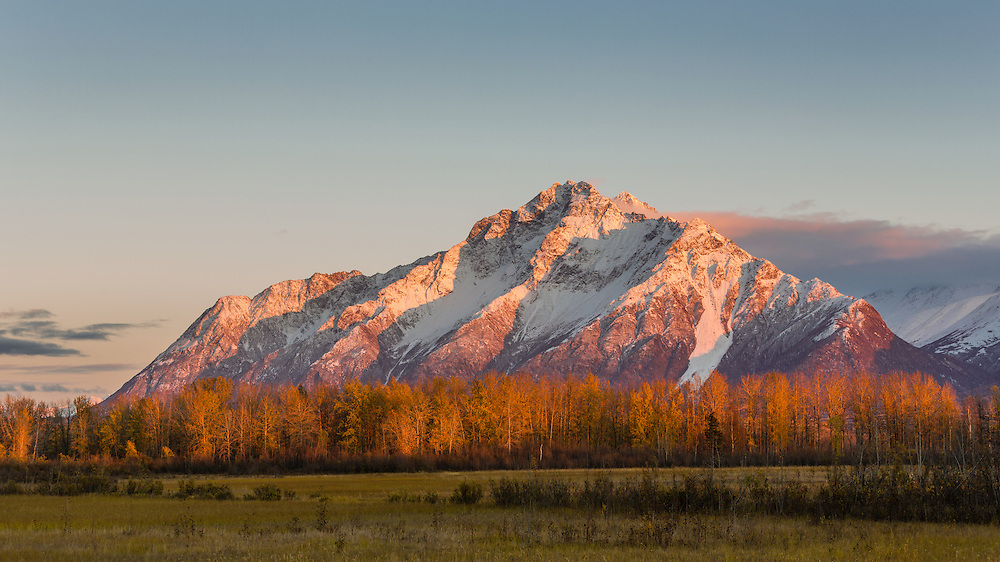 Alpenglow on Pioneer Peak at sunset at Palmer Hay Flats in Southcentral Alaska. Evening. Autumn.