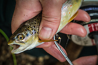 """""""Many men go fishing all of their lives without knowing that it is not fish they are after.""""<br />        - Henry David Thoreau"""