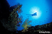diver on Liberty Wreck, Tulamben, Bali, Indonesia MR 270