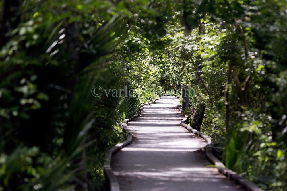 01 June 2015. Jean Lafitte National Historic Park, Louisiana.<br /> Raised walkway over the swamp at the Barataria Preserve wetlands south or New Orleans. <br /> Photo©; Charlie Varley/varleypix.com