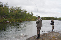 Silver Salmon Fishing..shot on the Kanektok River, Alaska, USA..