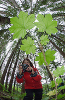 Photographer below a devils club plant in Williams Cove, Tongass National Forest, Alaska.