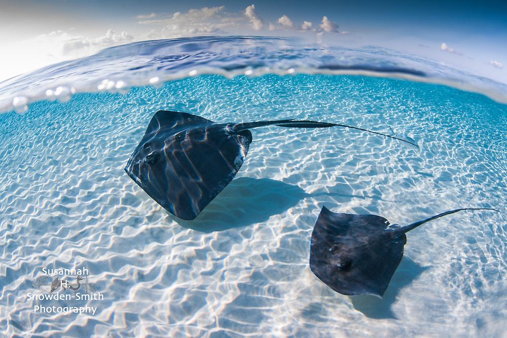 """Stingray Split In Blue"" - Stingray Sandbar, Grand Cayman"