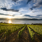 Walking through the vineyard at Cedar Creek Estate Winery, Kelowna, BC