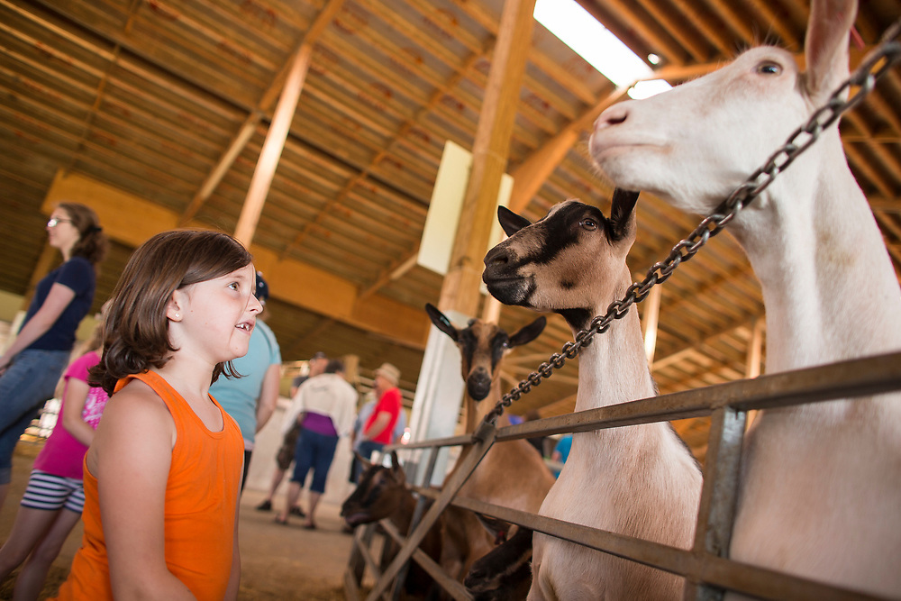 Audry McCallum (5) checks out some of the goats during the Breakfast on the Farm event at the Donkers Family Farm near Shedden, Ontario, Saturday, June 24, 2017.<br /> Farmers Forum/ Geoff Robins