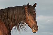 Horse Portraits, Head Shots
