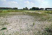 Nederland, Ooij, 24-7-2018Schapen zoeken verkoeling on een drooggevallen poel in een weiland. Het water is verdampt, de bodem opgedroogd en gebarsten door uitdroging . Door ede aanhoudende droogte en hitte, warme weer, hittegolf, hebben mens en dier het moeilijk .Foto: Flip Franssen