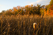 Middletown, New York  - Autumn scenes at Fancher-Davidge Park on  Oct. 16, 2014.