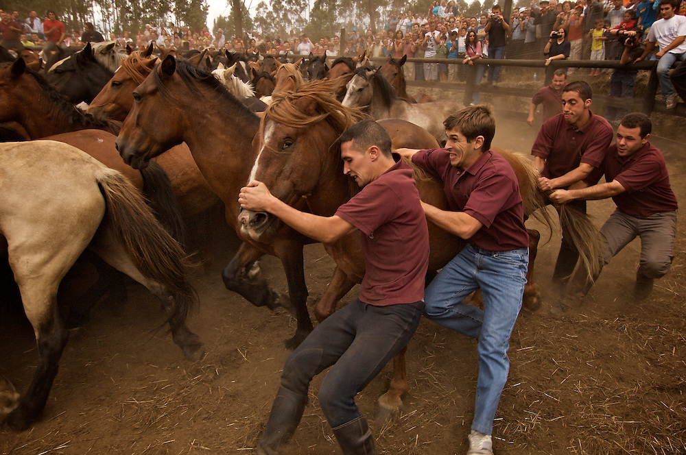 A wild horse roundup in Galicia, Spain.