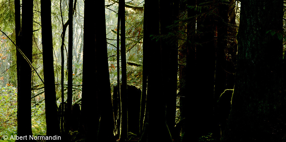 Forest trees high contrast light