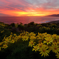 The best view in Malibu in my opinion is out at Point Dune. When I heard there was going to be a good sunset I went out to one of my favorite local spot. Even better when my buddy told me the yellow coresposis were in bloom. Of course this would be the perfect location to try to capture the sunset. And sure enough the light went wild and one of the best sunsets I've seen in a while. We had the best view in Malibu. I still can't believe it.