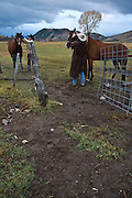 """Ranching Essay from the Mead Ranch in Jackson, Wyoming. The Mead Ranch is one of Jacksons oldest working ranches, and produces """"all natural"""" Mead Beef. This essay was shot in the Fall of 2006."""