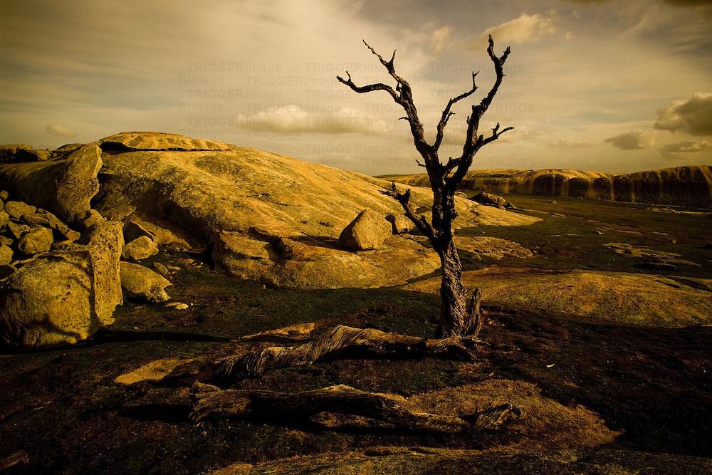 desolate dead tree in barren land