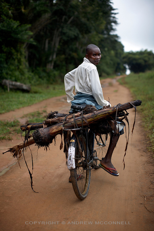 A man carries banana suckers on his bicycle to Km 5 for replanting, in Yamgambi, DR Congo, on Monday, Dec. 8, 2008. Suckers are how bananas reproduce and are dug out from the base (corm) of the mother plant. Local people with no space in their garden or village to plant extra plants can bring them to Km 5 in Yangambi where they can plant them and maintain ownership.