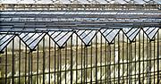 Nederland, Westland, 25-8-2018 Kas, kassen in het kassengebied van het westland. Er wordt groente in gekweekt. Het gebied tussen Naaldwijk en de kust is belangrijk vanwege de tuinbouw. Hier liggen de kassen tussen de rand van de bebouwde kom en de duinen, duingebied . Foto: Flip Franssen