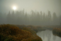 A foggy morning on Aster creek in Yellowstone National Park soon the sun will burn the fog away.