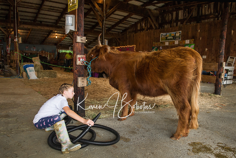 """Olivia Nason gives her Scotish Highlander """"Star"""" a blow dry on Saturday afternoon during the 4H Fair at the Belmont Fairgrounds.  (Karen Bobotas/for the Laconia Daily Sun)"""