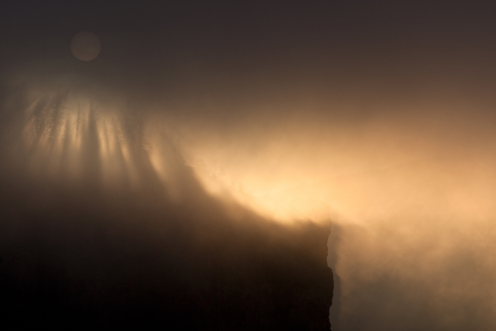 Pines are silhouetted against a foggy surise in the Grand Canyon of the Yellowstone in Yellowstone National Park, Wyoming