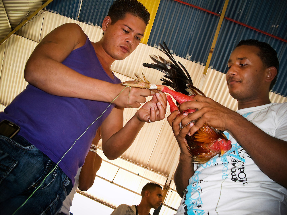 "Prisoners attach spikes to prepare a rooster for a cockfight at San Antonio prison in Porlamar, Venezuela. The prison on Margarita Island houses 2,000 inmates, and is known amongst criminals as the prime place to serve time.  It is unofficially run by convicted drug trafficker, Teófilo Rodríguez, who said in an interview that his goal was to create an atmosphere inside the prison as a, ""peaceful party"".  During his reign at the prison, Rodríguez has constructed four swimming pools, a cockfighting arena, hosts hip hop concerts and dances at the prison discothèque, and has built over 200 private rooms where prisoners may enjoy conjugal visits three times a week."
