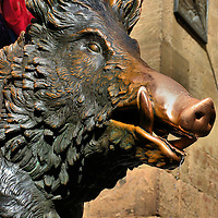 """Porcellino Bronze Boar Fountain in Florence, Italy<br /> Do you love Florence? Then place a coin in the mouth of this bronze boar named Porcellino while rubbing his snout. This tradition """"guarantees"""" your return.  This Piglet Fountain is located on the south side of a loggia (covered market) called Mercato Nuovo, which means """"New Market.""""  That's a relative term, because it was built in the mid-16th century. The original boar was sculpted by Pietro Tacca around 1634 and is now at the Museo Bardini.  A marble version is at the Uffizi Museum. This replica arrived in 2008."""