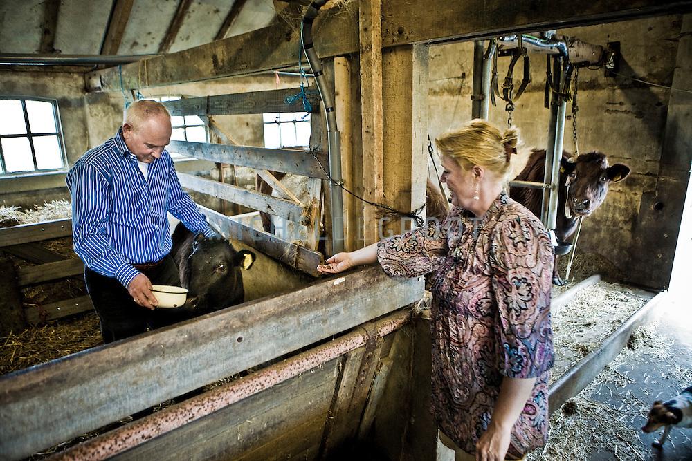 Henk Seij, directeur van de Desenco Group thuis op zijn boerderij tussen de koeien op 10 April, 2009 in Rotterdam, The Netherlands.  (photo by Michel de Groot)