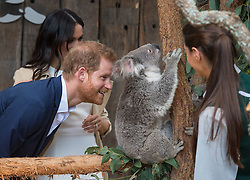 PICTURE RE-TRANSMITTED WITH CORRECT CAPTION INFO The Duke and Duchess of Sussex meet a Koala called Ruby during a visit to Taronga Zoo in Sydney on the first day of the Royal couple's visit to Australia.
