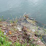 Plastic pollution at San Jose Estuary. San Jose del Cabo, BCS.