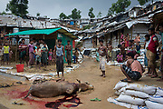 Men slaughter a bull ahead of Eid al-Fitr, a muslim festival that marks the end of Ramadan, Balukhali, Camp 11, part of the refugee camp sheltering over 800,000 Rohingya refugees, Cox's Bazar, Bangladesh, June 12, 2018. Children, the infirm and elderly, men and women, face impossibly difficult conditions in a sprawling temporary city built of plastic sheets and bamboo.
