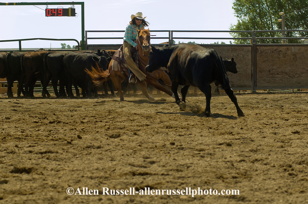 Cowgirl, Laurie McGuane, riding quarter horse in cutting horse competition, Big Timber, Montana