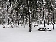Picnic tables in the Arthur Ross Pinetum of Central Park waiting patiently for warmer days.