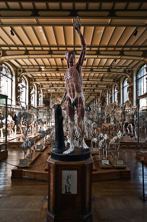 Gallery Of Comparative Anatomy Bony