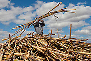 Salinas_MG, Brasil.<br /> <br /> Trabalhadores rurais durante a colheita de cana de acucar para producao de cachaca no municipio de Salinas, Minas Gerais.<br /> <br /> Agricultural workers during the sugar cane harvest for production of cachaca in Salinas, Minas Gerais.<br /> <br /> Foto: RODRIGO LIMA / NITRO