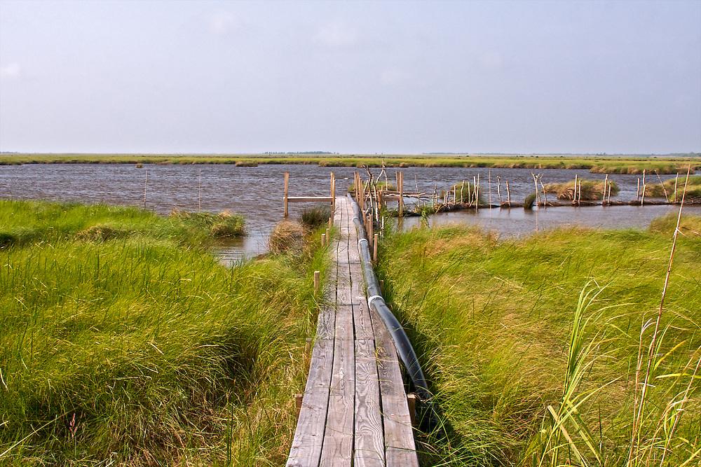 Paul J. Rainey Wildlife Sanctuary, Vermilion Parish, Louisiana, USA